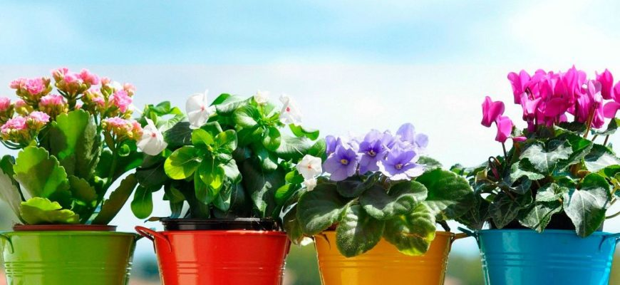 Комнатные цветы по знаку зодиака