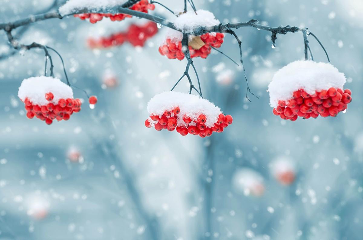 Лунный календарь на февраль 2019 года садовода и огородника