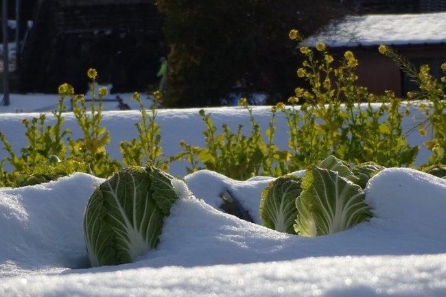 Лунный календарь на январь 2019 года садовода и огородника