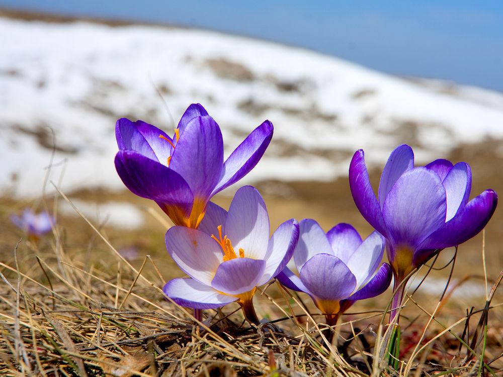 Лунный календарь на март 2019 года садовода и огородника