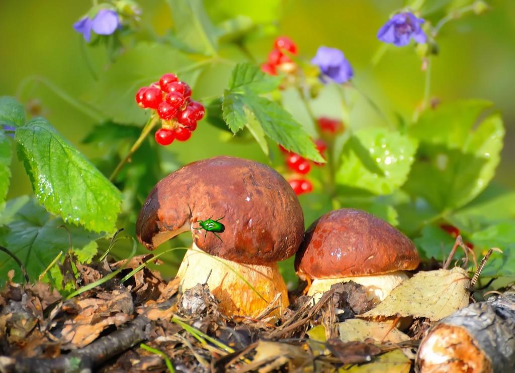 Сбор грибов в 2018 новое видео