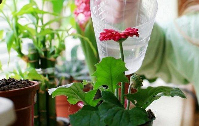 Чем подкормить домашние цветы в домашних условиях