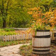 Что можно посадить в ноябре на даче?