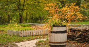 Что можно посадить в ноябре на даче
