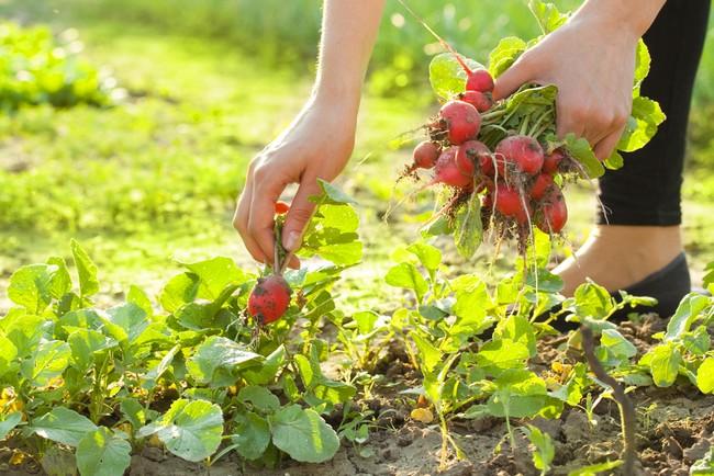 Лунный календарь на июнь 2019 года садовода и огородника