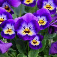 Когда сажать цветы в феврале 2019 года?