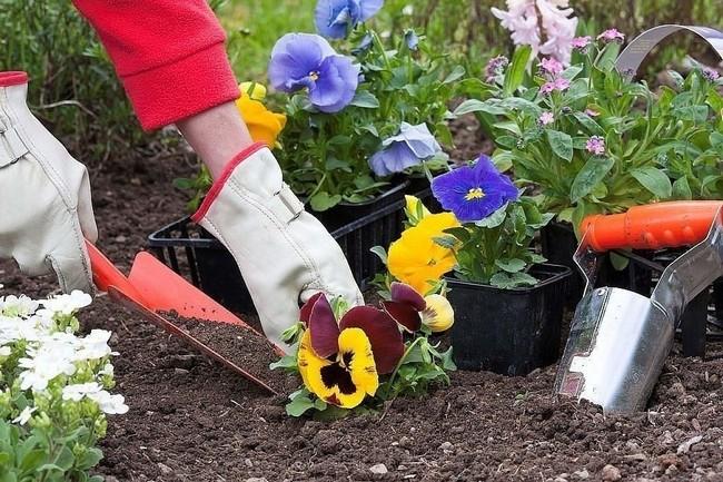 Когда сажать цветы в феврале 2019 года