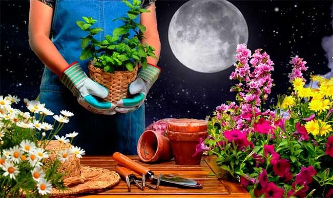 Лунный календарь цветовода на апрель 2019 года для комнатных растений