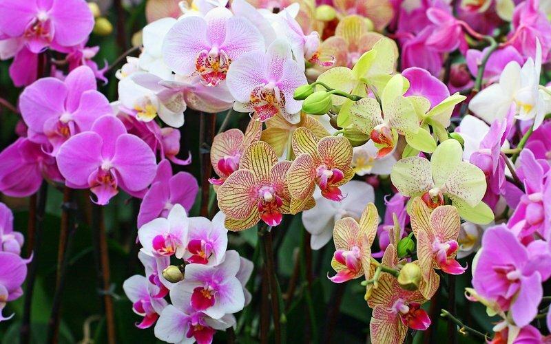 Лунный календарь цветовода на август 2019 года для комнатных растений