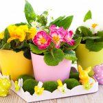 Лунный календарь цветовода на июль 2019 года для комнатных растений