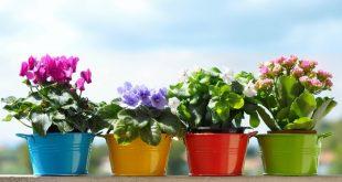 Лунный календарь цветовода на июнь 2019 года для комнатных растений