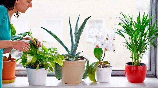 Лунный календарь цветовода на январь 2019 года для комнатных растений
