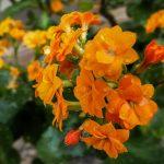 Лунный календарь цветовода на май 2019 года для комнатных растений