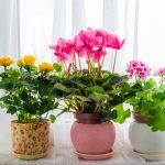 Лунный календарь цветовода на март 2019 года для комнатных растений