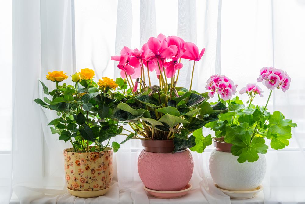Лунный календарь цветовода на март-декабрь 2019 года для комнатных растений