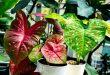 Лунный календарь цветовода на сентябрь 2019 года для комнатных растений