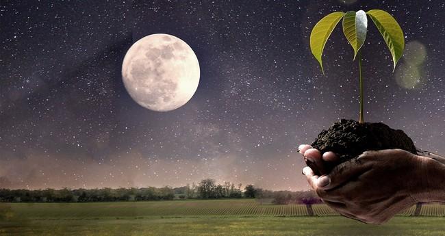 Лунный календарь на август 2019 года садовода и огородника