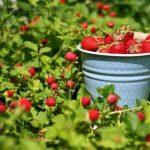 Лунный календарь на июль 2019 года садовода и огородника