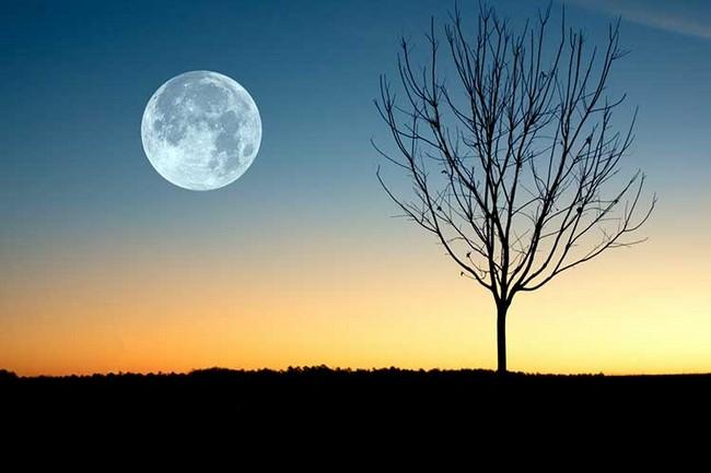 Лунный календарь на ноябрь 2019 года садовода и огородника