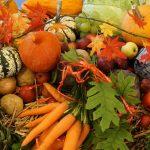 Лунный календарь на октябрь 2019 года садовода и огородника