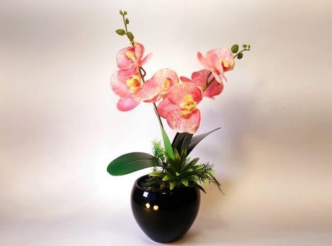 Лунный календарь цветовода на декабрь 2019 года для комнатных растений