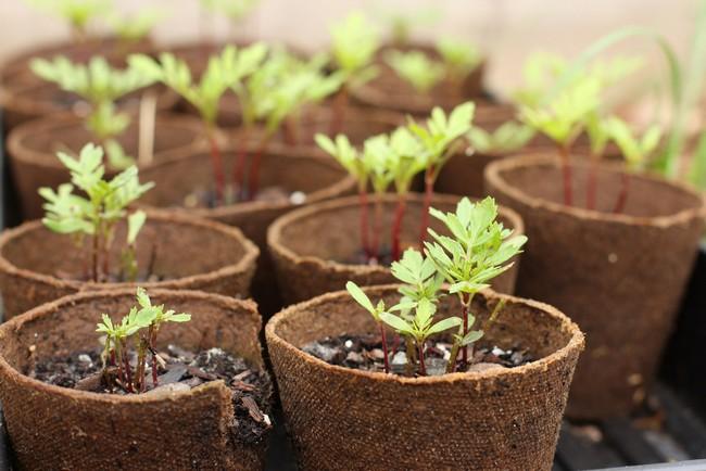 Какие условия необходимы семенам для прорастания