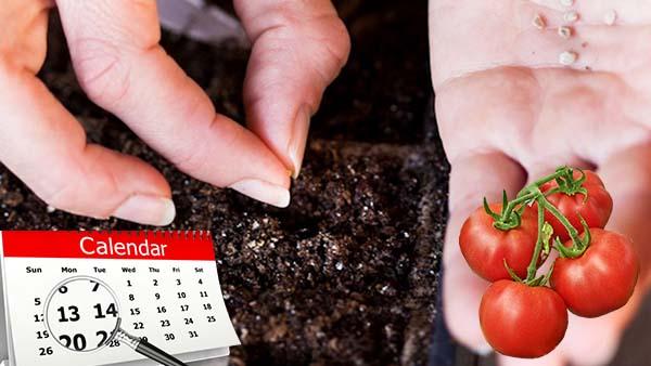 Помидоры посадка на рассаду лунный календарь 2019