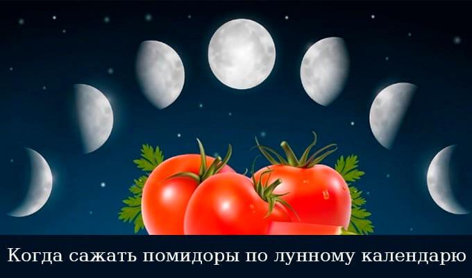 Посадка помидор на рассаду в 2019 году по лунному календарю в марте