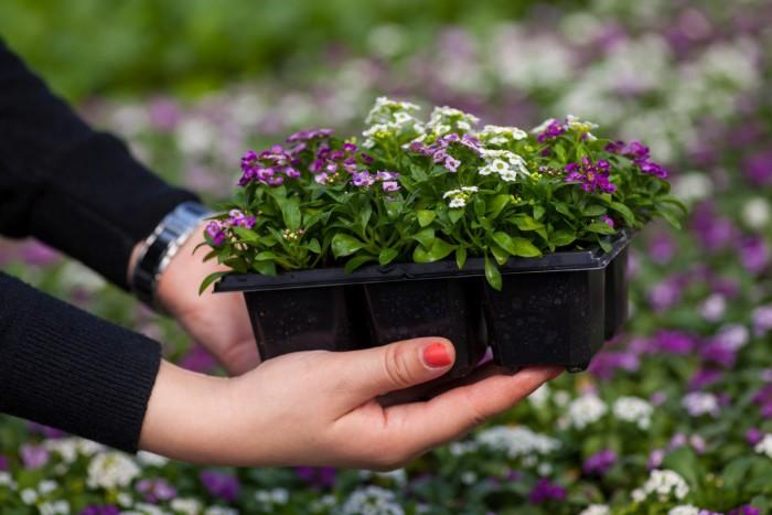 Когда сажать цветы в марте 2019 года