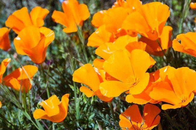 Какие цветы посадить на даче чтобы цвели все лето фото с названиями