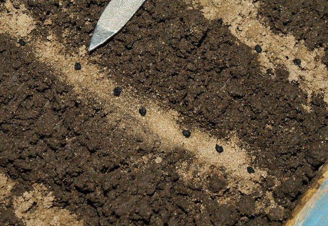 Какие семена лука или гороха глубже заделывают в почву и почему
