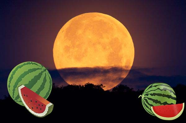 Когда сажать рассаду арбузов лунный календарь
