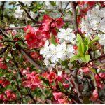 Лунный календарь на апрель 2019 года садовода и огородника цветовода