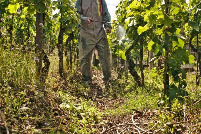 Виноград весной обработка и подкормка