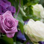 Болезни роз описание с фотографиями и способы лечения