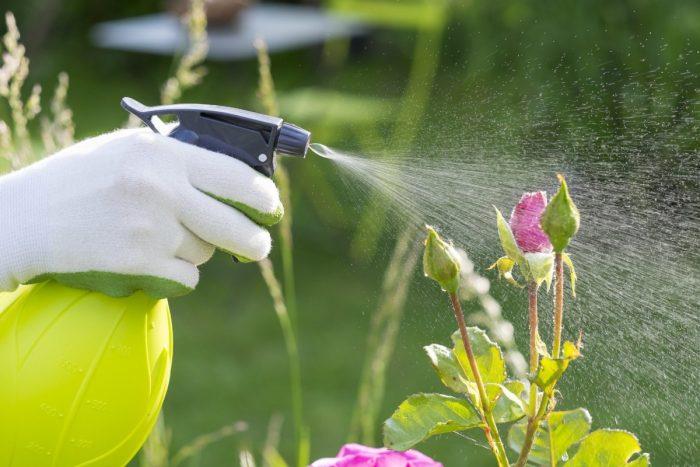 Борьба с тлёй на садовом участке народными средствами
