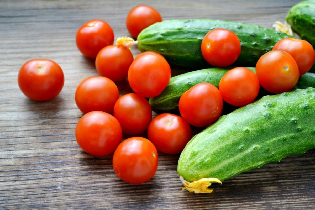 Дрожжи для подкормки помидоров и огурцов