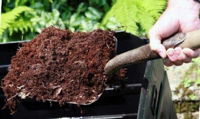 Подкормка картофеля во время цветения