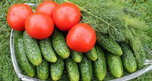 Подкормка огурцов и помидоров борной кислотой