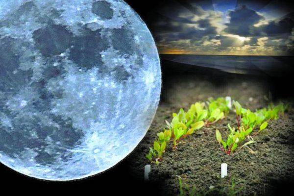 Фазы луны в июне 2019 года по дням для посадки