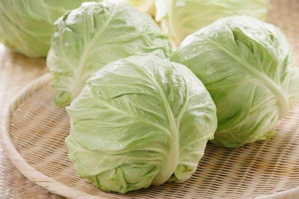 Как квасить молодую капусту в домашних условиях?