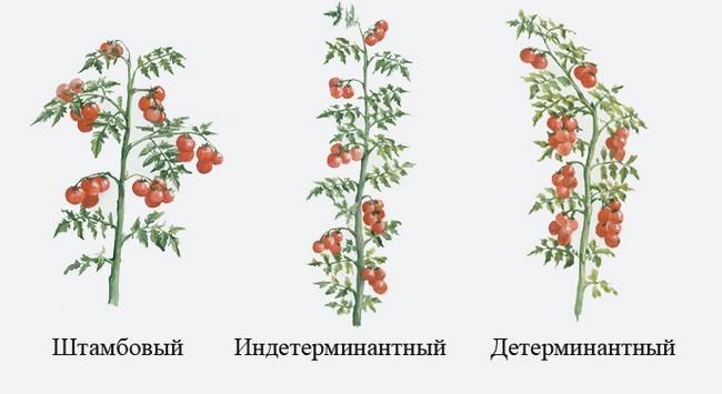 Как пасынковать помидоры в теплице пошагово