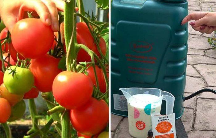 Чем подкормить помидоры во время плодоношения?