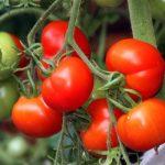 Как хранить зелень в холодильнике долго свежим?
