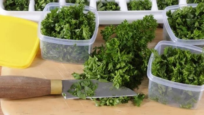 Как хранить зелень в холодильнике долго свежим
