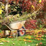 Обрезка сливы осенью: схема для начинающих