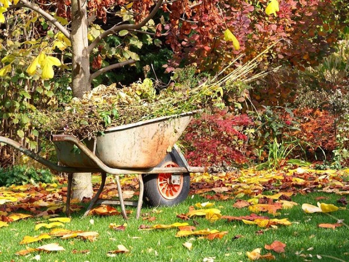 Что сажать в сентябре на даче в открытый грунт