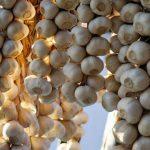 Чем подкармливать арбузы в открытом грунте?