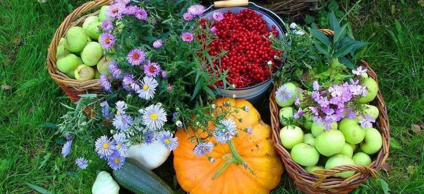 Лунный календарь на сентябрь 2019 года садовода и огородника цветовода