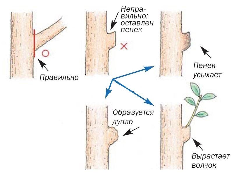 Осенняя обрезка плодовых деревьев и кустарников осенью своими руками